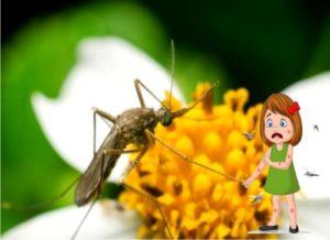 Cómo eliminar los mosquitos de las plantas