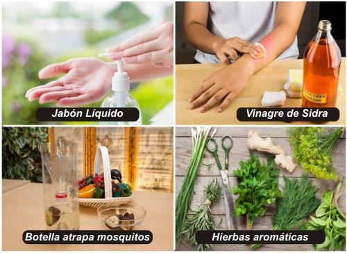 Receta casera para eliminar mosquitos