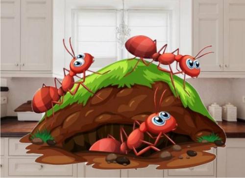 cómo eliminar a las hormigas