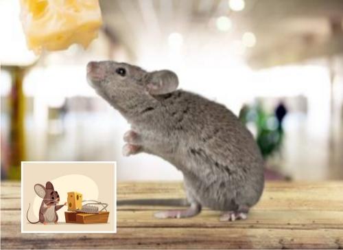 cómo eliminar ratones de casa
