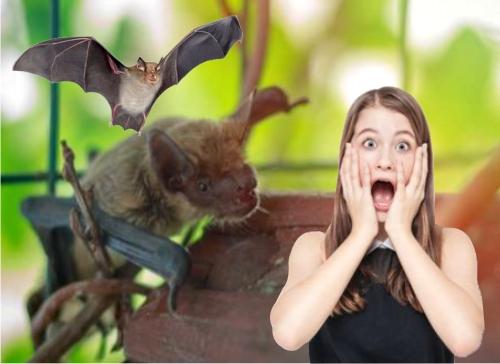 cómo eliminar murciélagos